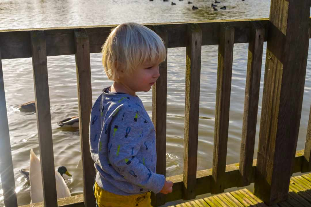 A photograph of a little boy at Slimbridge Wetlands Centre - Finding Happiness And Chasing Rainbows - Mrs H's Favourite things