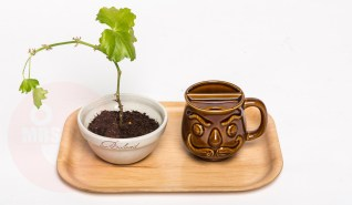"On this plywooden tray: ""Abraham"" mug and a personalized ceramic bowl from the 1970s containing a Geranium plant (All items in mint condition, exept for the plant) custom made 50 th birthday tray (€ on request)"