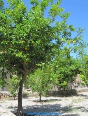 7 La Residencia Lemon Trees_new
