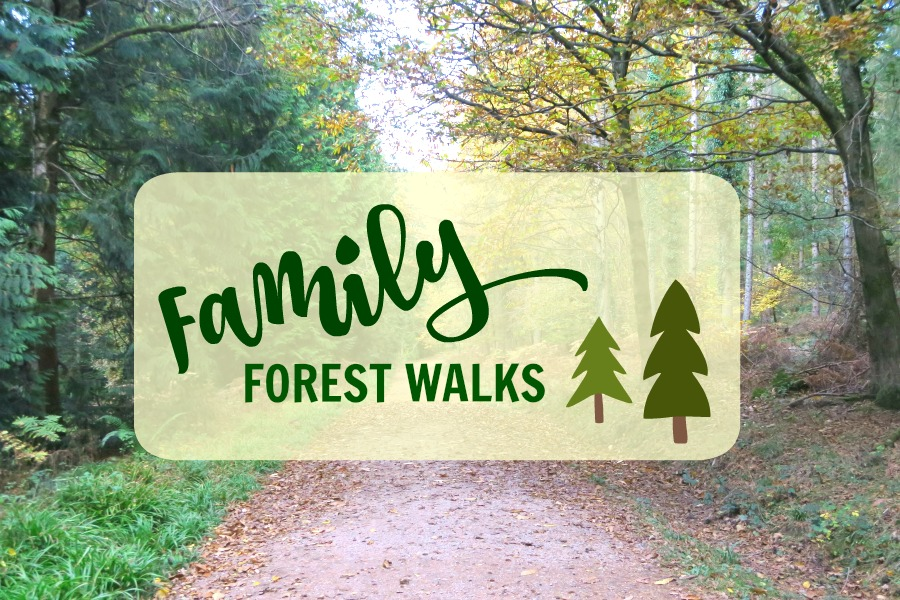 Family Forest Walk