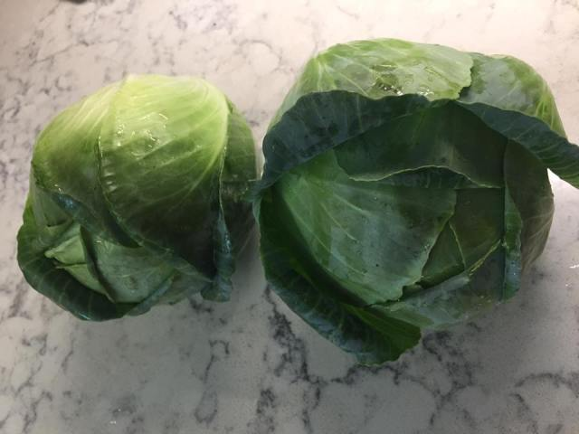 Cabbages from the garden to be turned into freezer cole slaw