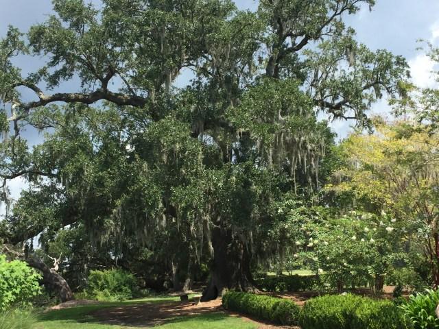 The beautiful trees and gardens of the Boone Hall Plantation in Mount Pleasant, South Carolina.
