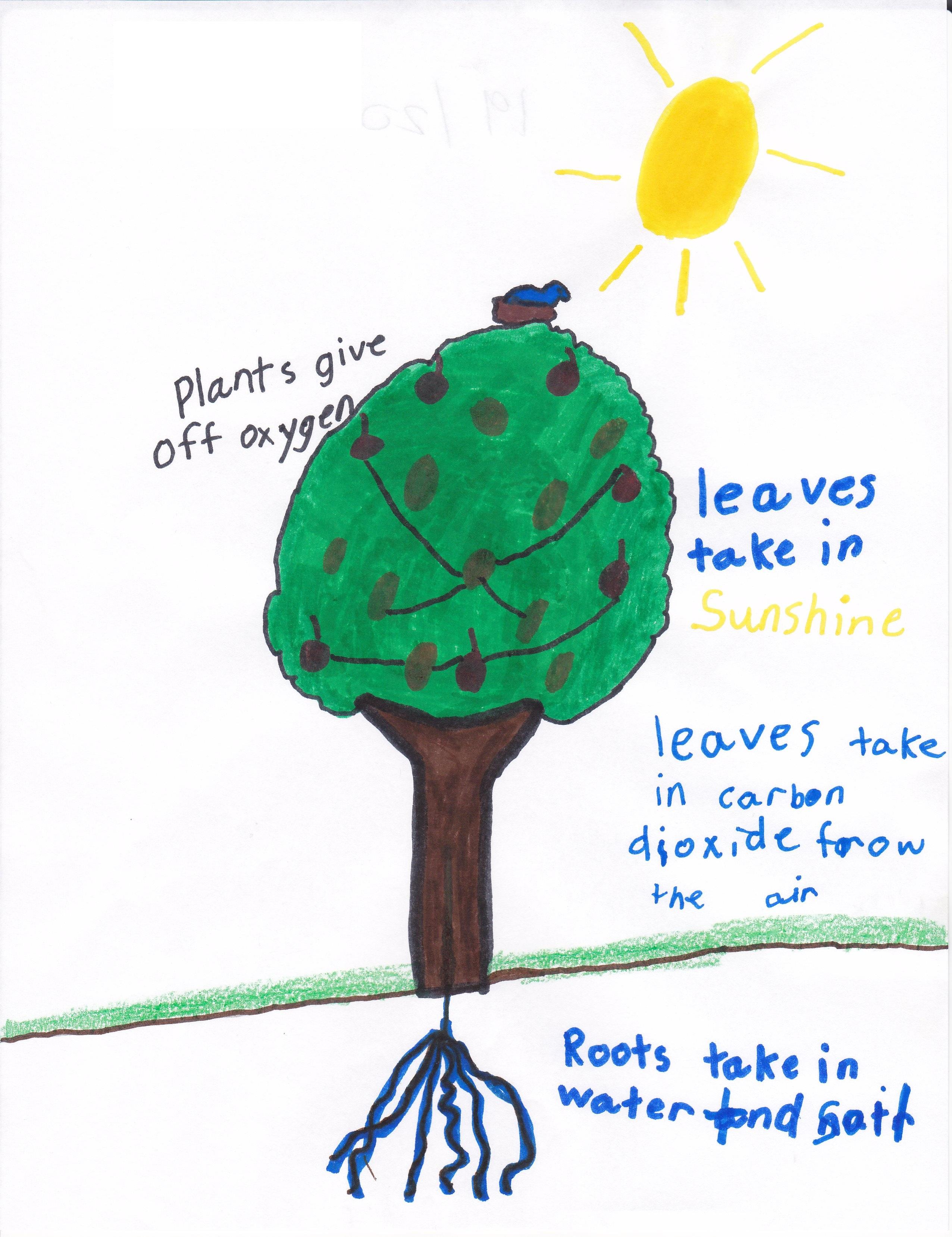 4th Grade Photosynthesis