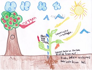 4th Grade: PHOTOSYNTHESIS | Mrs Moskal