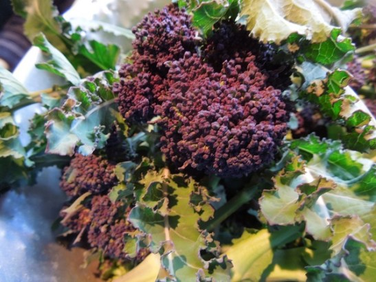 Image of purple sprouting broccoli