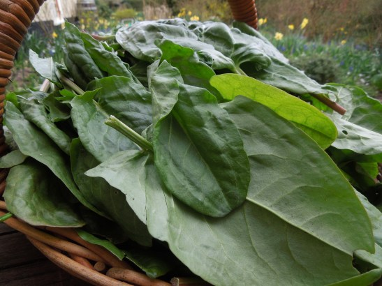 Image of a basket full of spinach