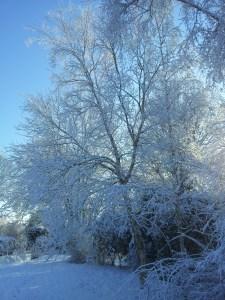 Image of wintery garden