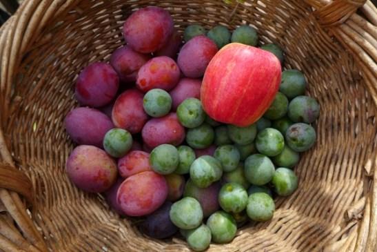 Image of fruit in a basket