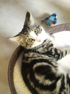 Image of Scampi the kitten