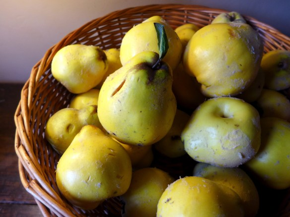 Image of basket of quinces