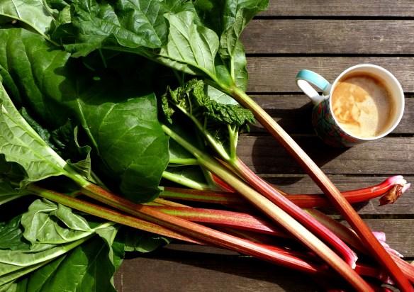 Image of rhubarb picked