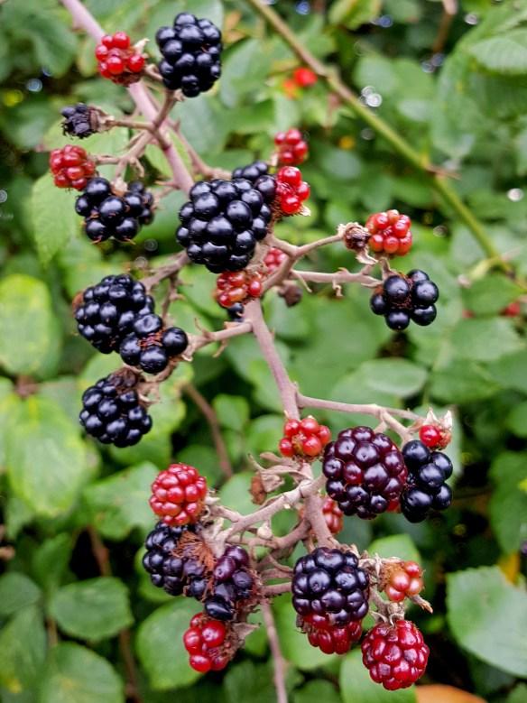 Image of blackberries