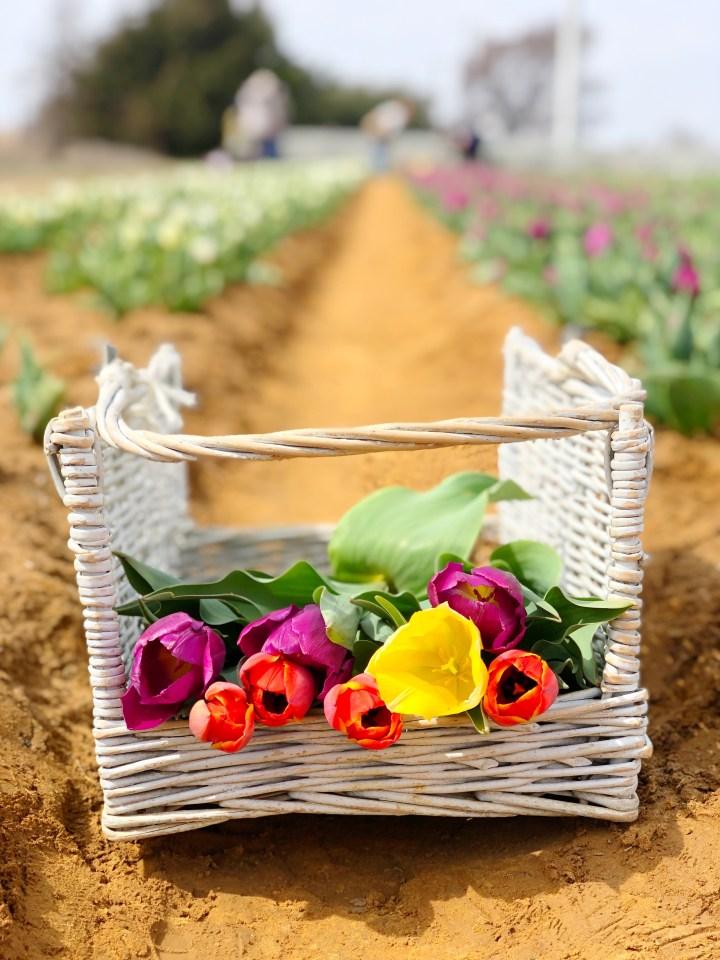 A Spring Getaway