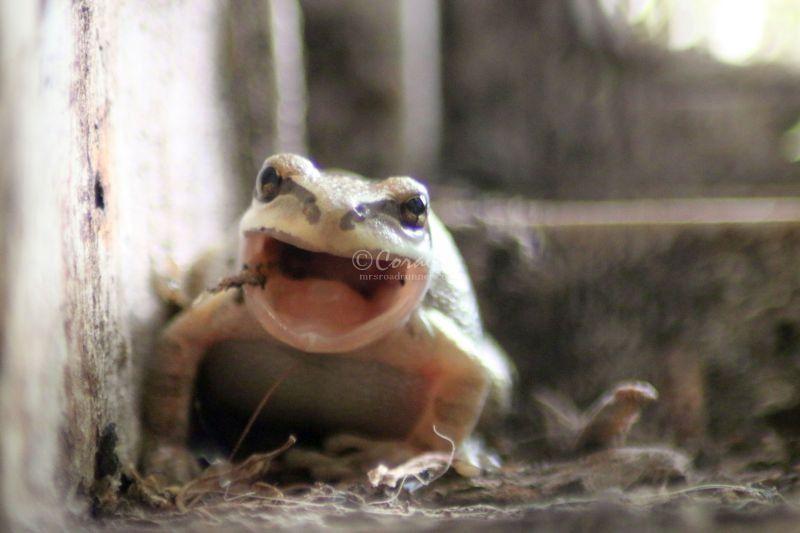 Wild Frog Eating in the High Desert
