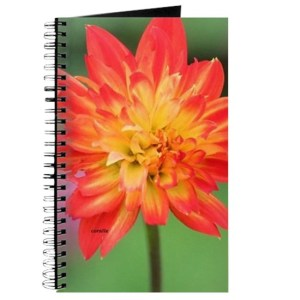Colorful Dahlia Bud Opening 052 Journal