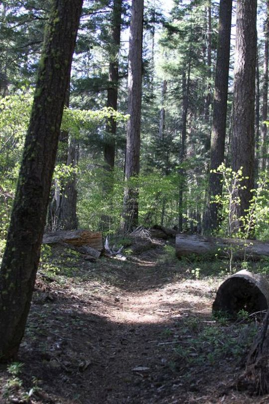 Hiking Mt Jefferson Wilderness Cascade Mountains Oregon