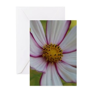 Colorful Bloom in the Flower Bed Greeting Cards