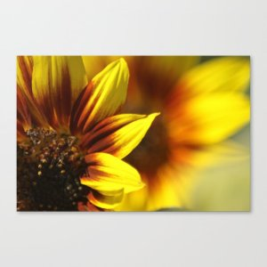 Colors of the Sunflowers Canvas Print