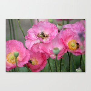 Pink Poppy Flowers With Honeybees Canvas Print