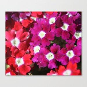 Verbena Flowers Canvas Print