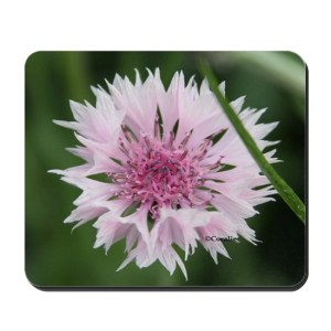 Bachelor Button Corn Flower Mousepad