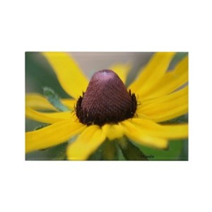 Black Eyed Susan Flower Magnets Rectangle Refrigerator Magnet