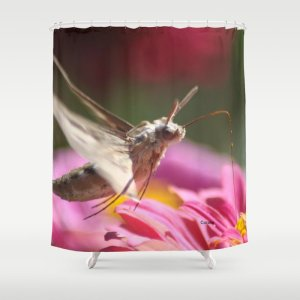 Colorful Moth on a Zinnia Flower Shower Curtain