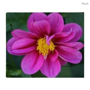 Dahlia Flower Bloom Throw Blanket