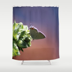 Gray Hairstreak Butterfly In The Garden Shower Curtain