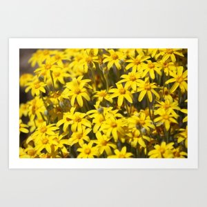 High Desert Wildflowers Art Print