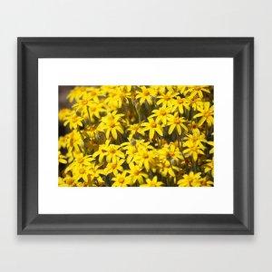 High Desert Wildflowers Framed Art Print