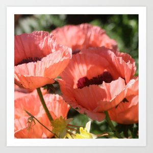 Poppy Flower Color Art Print