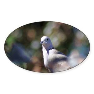 Portrait of a Dove Decal Sticker Oval