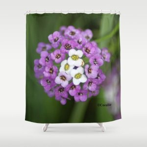 alyssum flower bloom Shower Curtain