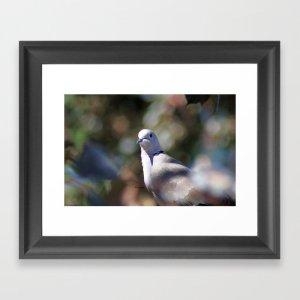 portrait of a dove Framed Art Print