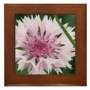 Bachelor Button Corn flower Framed Tile