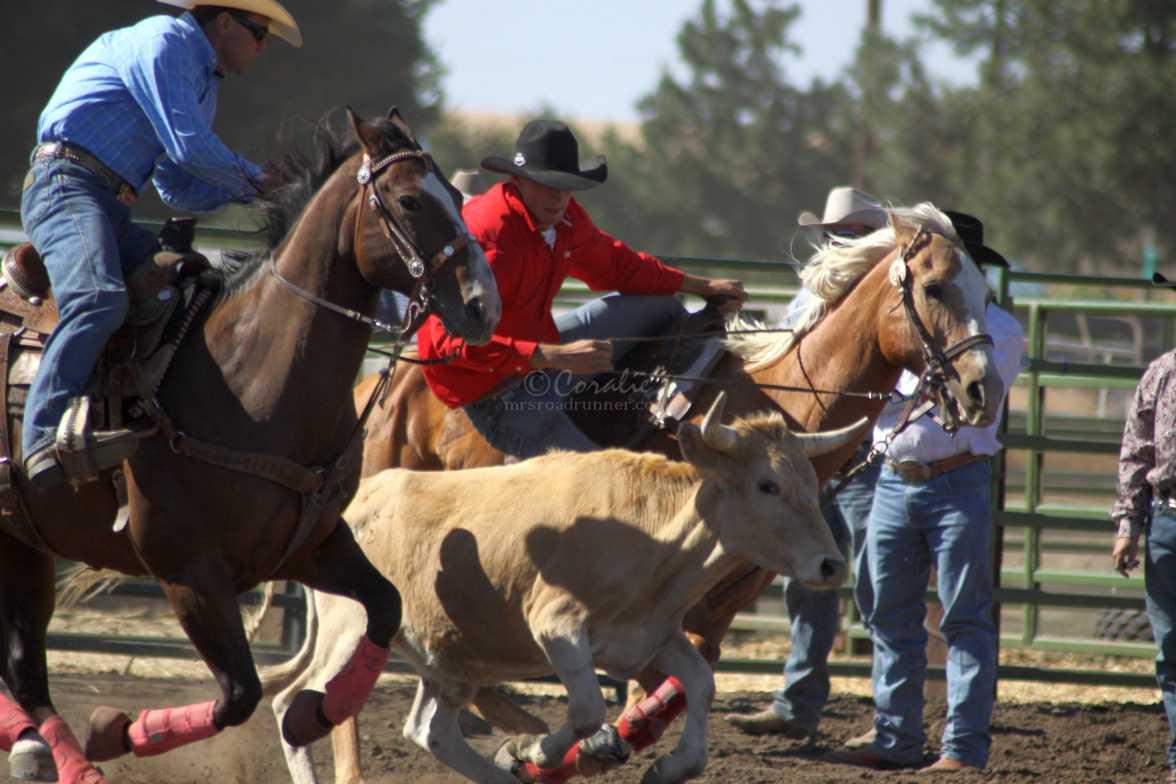 bulldogging rodeo 943