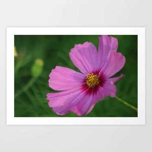 Flash Of Pink Art Print