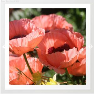 Poppy Flower Color Art Print