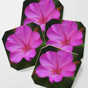 Four Oclock Flower In Pink Coasters