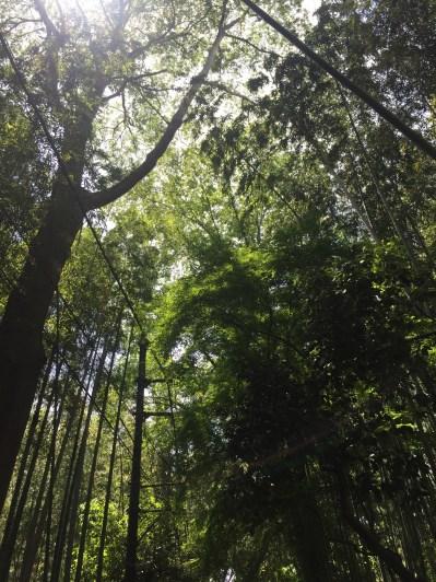 The Bamboo Path.