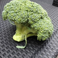 broccoli moestuin
