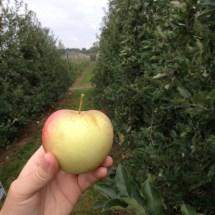 appel zelfpluk waregem elstar appelmoes zelf appels plukken herfst boomgaard