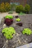 verschillende salades