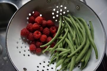 beans raspberries cobra harvest monday june juni oogst oogsten uit de tuin vers moestuin volkstuin klimbonen boontjes