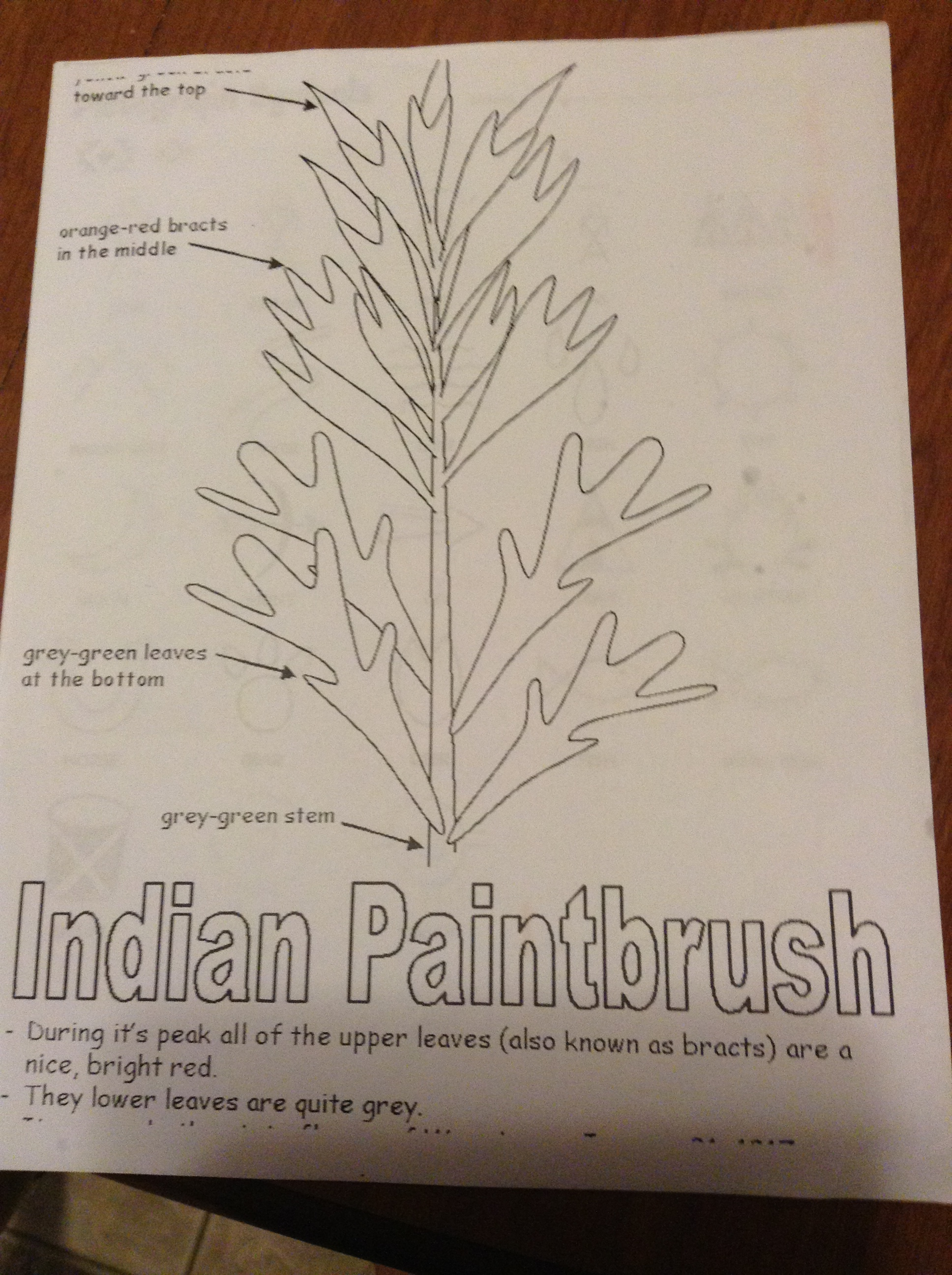 Native American Worksheets 3rd Grade