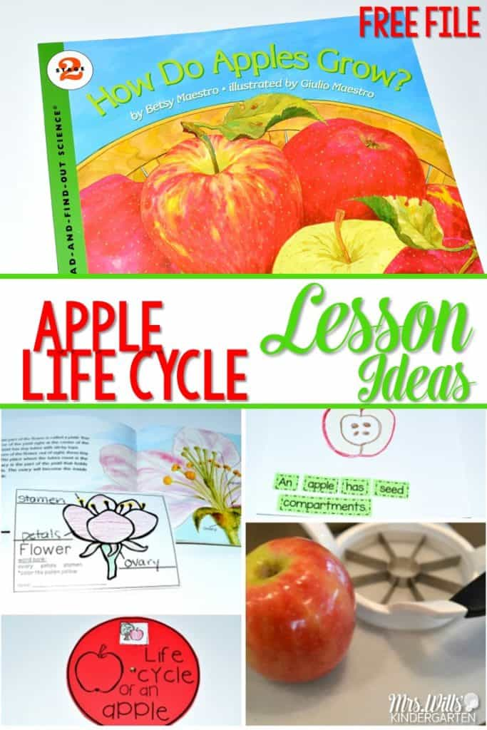 Apple Life Cycle Lesson Ideas. Learning about apples in kindergarten is a tradition. This informational book about apples is packed with apple facts. See how we integrate reading, writing, science, and math! FREE file included