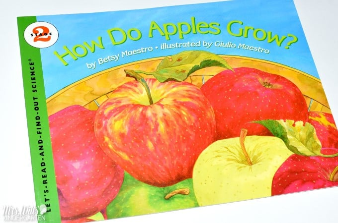 Apple Life Cycles Lesson Plan ideas. Learning about apples in kindergarten is a tradition. This informational book about apples is packed with apple facts. See how we integrate reading, writing, science, and math! FREE file included