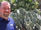Just in case you thought they were small cactus Dad!