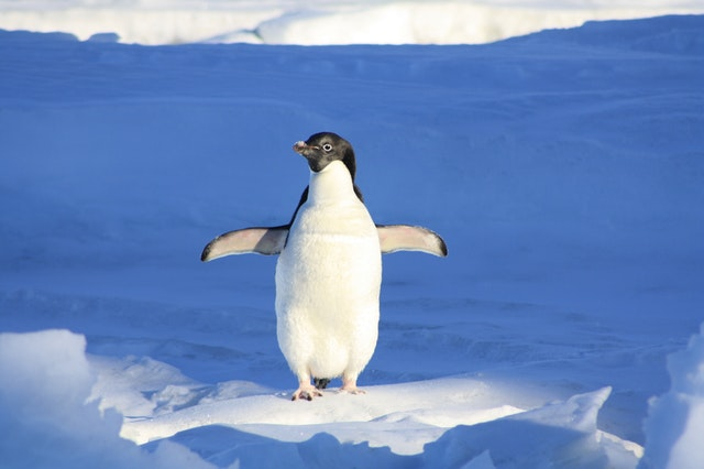 penguin on ice in a cold environment